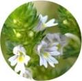 БРИЛЛИАНТОВЫЙ УХОД Ref.23-DIAMOND2 (2мл)